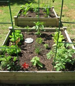 cropped-garden2.jpg