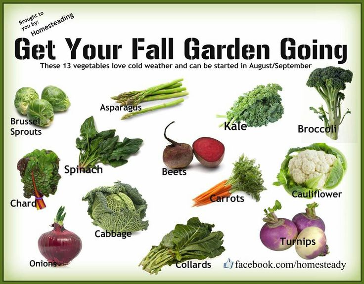 Fall Garden Vegetables Sunny Simple Life What Vegetables